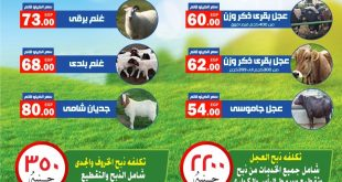 اسعار اضاحى العيد 2021 فى المحلاوى من 28 يونيو 2021